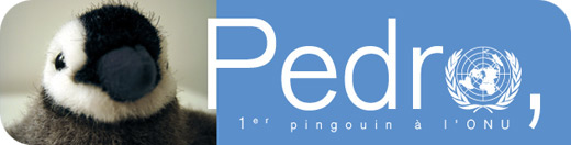 Pedro, 1er pingouin à l'ONU
