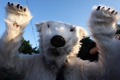 je suis un ours blanc ultra-moute