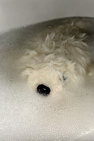 Furry prend un bain