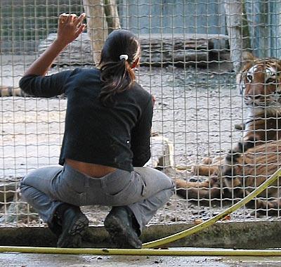 Indra et ses tigres