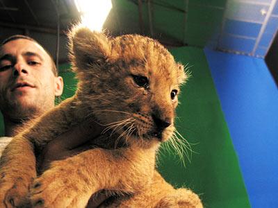 Romuald nous présente son lionceau