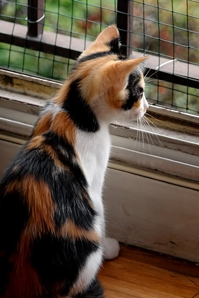 Mandarina et la fenêtre
