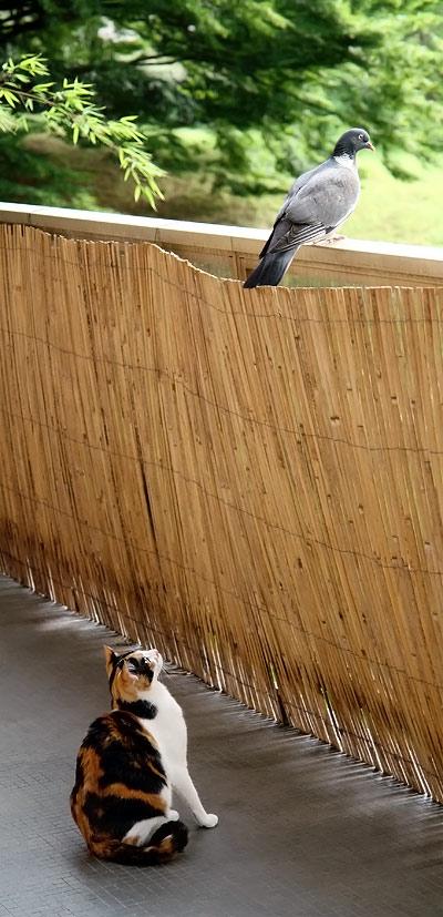 Mandarina jauge le mystérieux animal perché sur son balcon