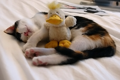 avec son canard (Mandarina's Duck)