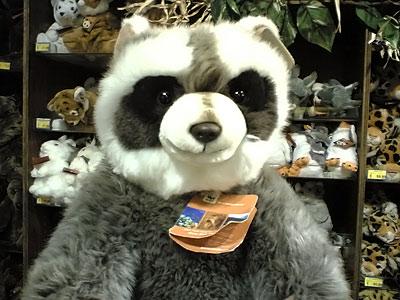 râton-laveur WWF